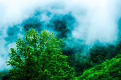 梅雨の里山