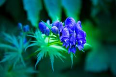 美しい花には毒がある^^;;近寄らないように。