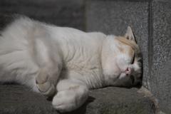 眠るだけ2