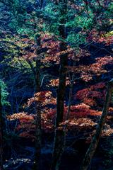 森林の紅葉