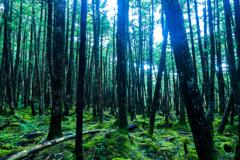 もののけの森の中へ