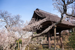 東慶寺_鎌倉