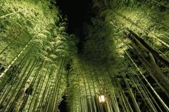 竹林の下で