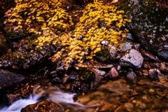渓谷の秋色
