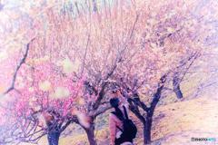 梅の花に魅了