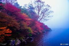 霧に覆われた白駒の紅葉