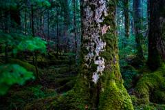苔に覆われた世界