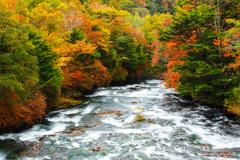 色鮮やかな秋
