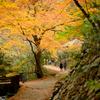 佐野 蓬莱山の紅葉