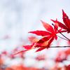 秋は終わり 冬へと向かう