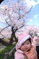 晴れ空に娘と桜