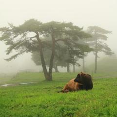 A foggy ranch
