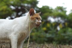 葛西臨海公園に住む猫