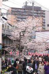 桜に集う人々