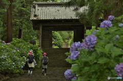 大中寺の花(女子カメラ)