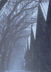 地吹雪の頃