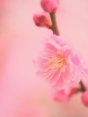 梅の花今年初撮り