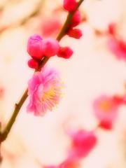 咲き出づる梅の初花