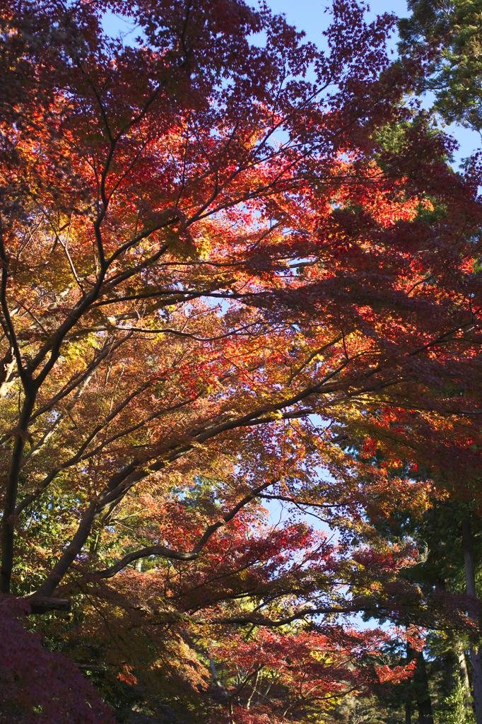 秋を眺めながら