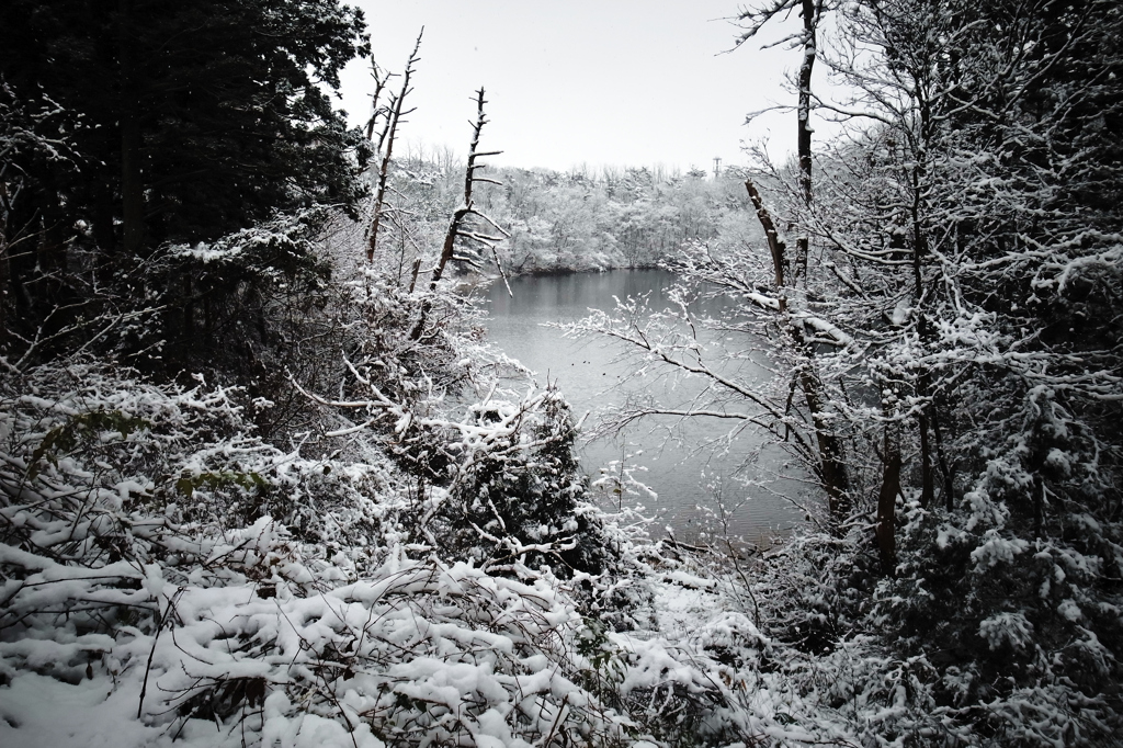 小さな池の朝