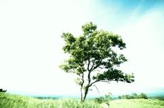 あの夏の午後
