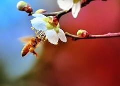 こんちわ~ッ いらっしゃ~い 春のご挨拶