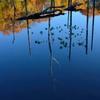小呂池 立枯れ木の秋