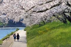 希望の桜路