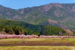 名倉の春 その2