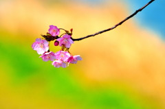 春は枝先まで