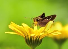 蝶々三昧 みなさ~ん、私も蝶々です。 可愛く撮ってね、ハイポーズ。