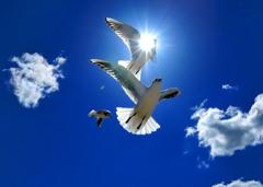 希望の大空へ