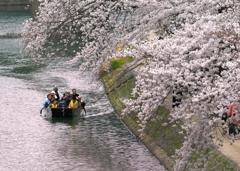 花見舟で行く