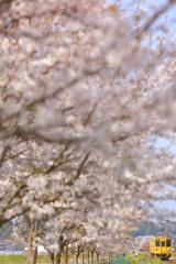 春色の汽車