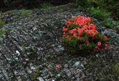 奇岩に咲く花