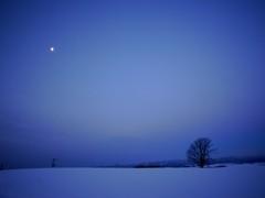 月と哲学の木
