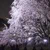 リベンジ:夜桜03