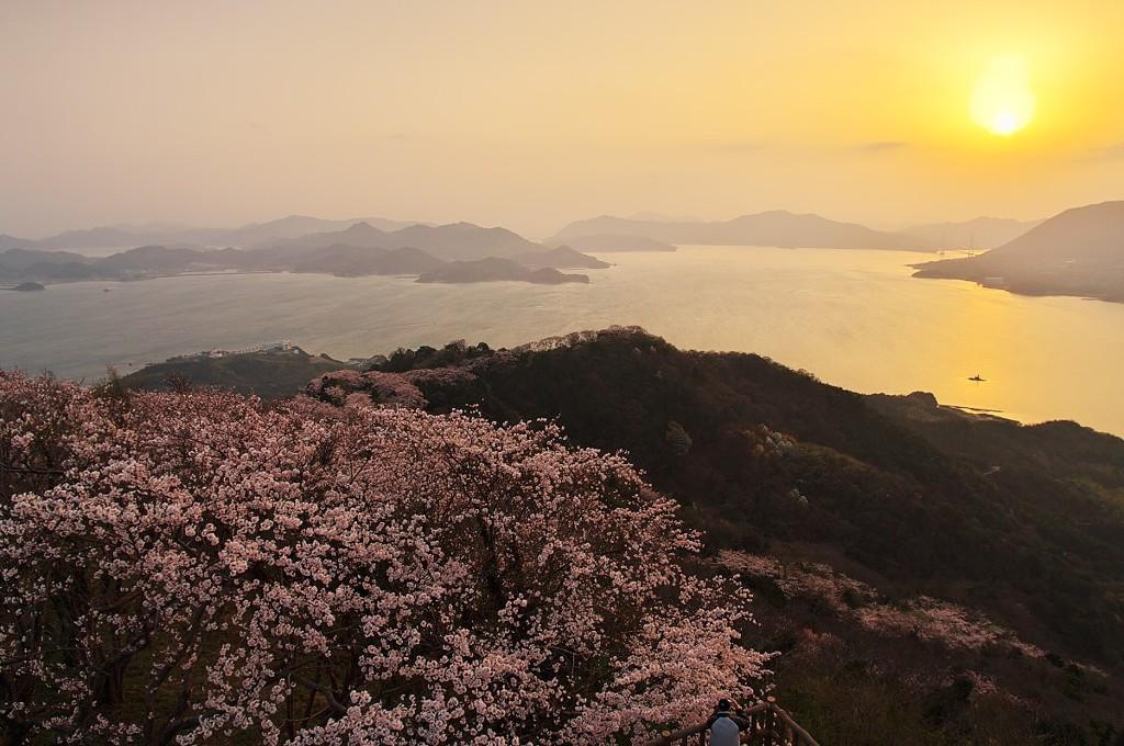 いわぎ三千本桜