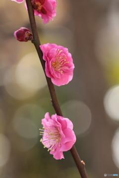 春キラキラ