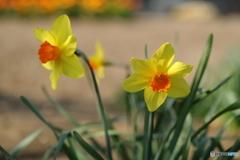 光と春風の中で