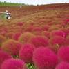紅モコの丘