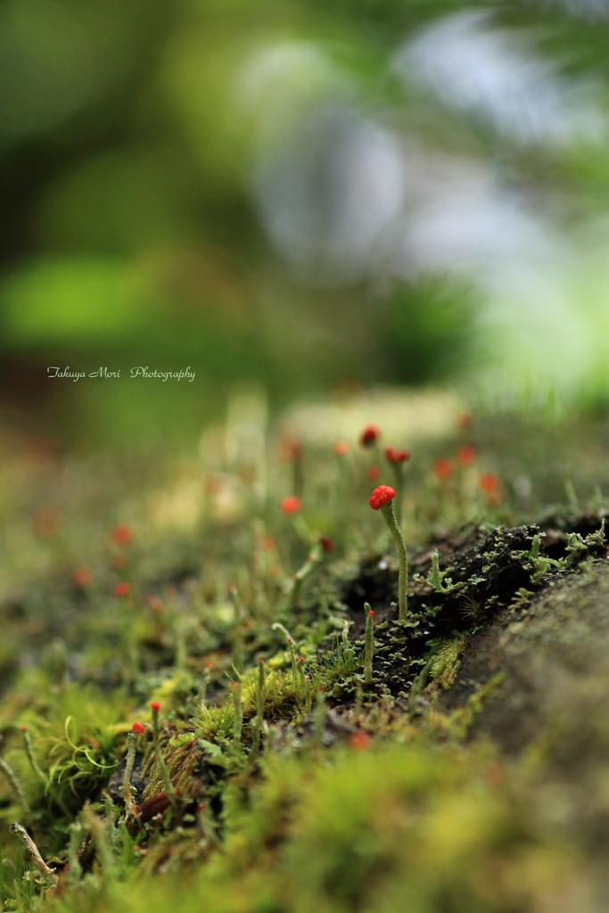 神秘の森:森の住人たち