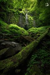 神秘の森・沢の生まれる場所