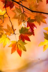 優しさの秋