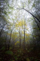 白き森に秋を羽織る者