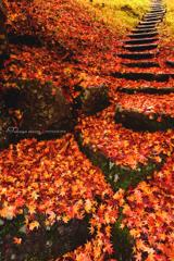 秋の終りの美しさ