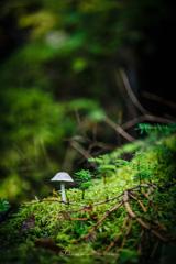 森の住人たち