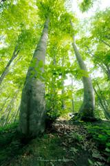 美しき森で