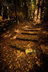 寂秋の木漏れ日