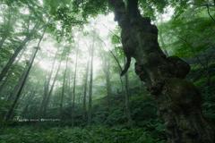 奥入瀬の森から
